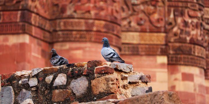 Skuteczna ochrona przed ptactwem
