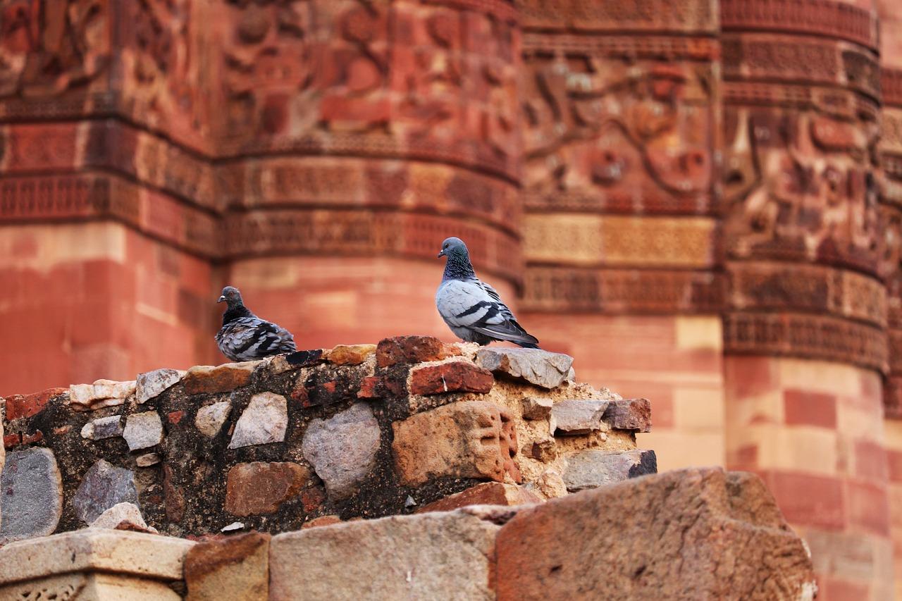 ochrona przed ptakami kolce